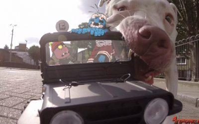 Vídeo: Por la ciudad con un coche radiocontrol y unos pasajeros muy especiales